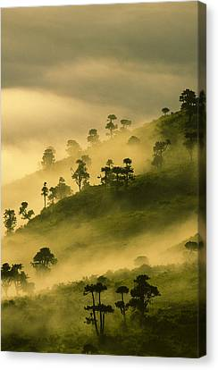 Dawn Mist Ngorongoro Crater Canvas Print