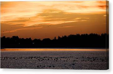 Canvas Print featuring the photograph Dawn Of The Birds by Trever Miller