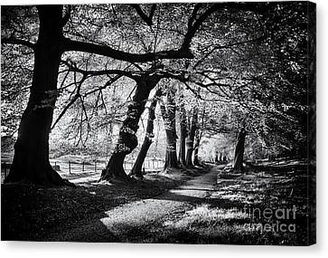 Early Spring Canvas Print - Dawn Tree Light  by Tim Gainey