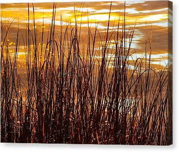 Dawn's Early Light Canvas Print by Karen Wiles