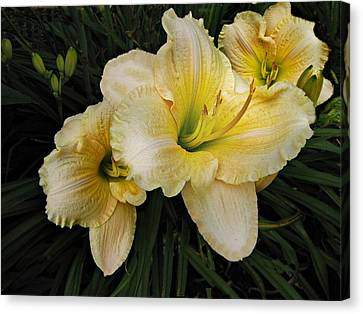 Canvas Print featuring the photograph Day Lilies A Short Life by David Dehner