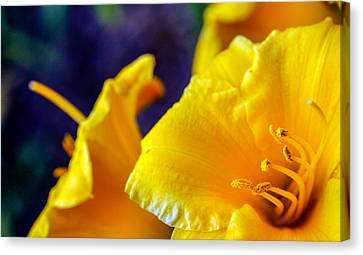 Canvas Print featuring the photograph Day Lilies by Cathy Donohoue