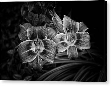 Day Lilies Number 4 Canvas Print