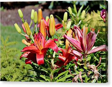 Day Lillies In The Garden Canvas Print
