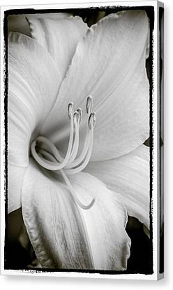 Canvas Print featuring the photograph Day Lily  by Craig Perry-Ollila