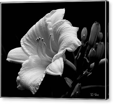 Canvas Print featuring the photograph One Day Lily  by James C Thomas