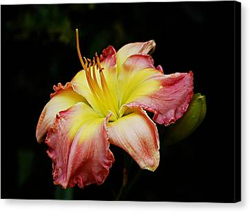 Canvas Print featuring the photograph Day Lily by Linda Brown