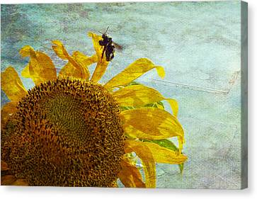 Daydreaming Canvas Print by Toni Hopper