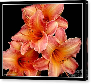 Canvas Print featuring the photograph Daylilies 2 by Rose Santuci-Sofranko