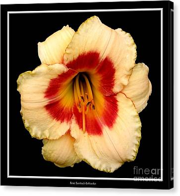 Canvas Print featuring the photograph Daylily 3 by Rose Santuci-Sofranko