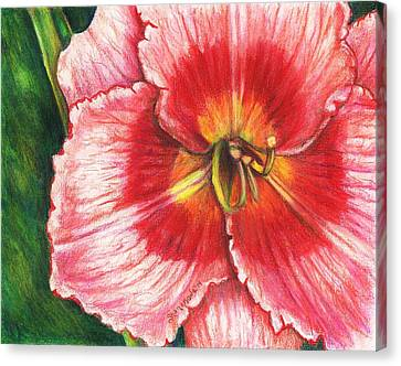 Daylily Delight Canvas Print