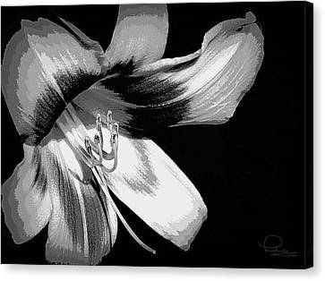Daylily In Gray Canvas Print