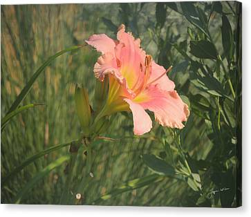 Canvas Print featuring the photograph Daylily In The Sun by Jayne Wilson