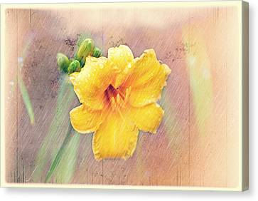 Daylily  Showers Canvas Print by Mary Timman