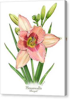 Daylily Svengali  Canvas Print by Artellus Artworks