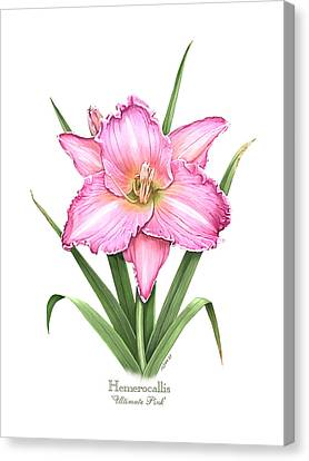 Daylily Ultimate Pink Canvas Print by Artellus Artworks