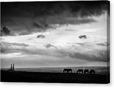 Days End At Hvammstangi Canvas Print by Dave Bowman