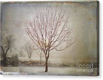 Days Of Old Canvas Print by Betty LaRue