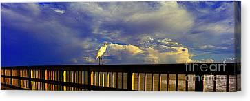 Daytona Beach Fl Bird Sun Glow Pier  Canvas Print