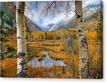 Dazzling Fall Foliage Canvas Print by Mark Whitt