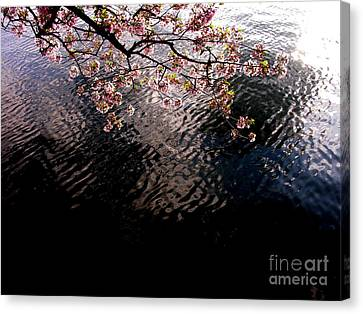 Canvas Print featuring the photograph Dc Cherry And Black by Jacqueline M Lewis
