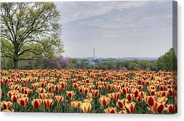 Dc Tulips  Canvas Print by Michael Donahue