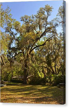 De Leon Springs - Classic Old Florida Canvas Print