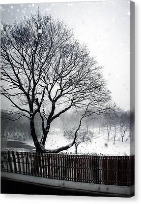 Dead Of Winter Canvas Print by Lilliana Mendez