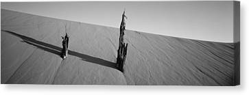 Coral Pink Sand Dunes Canvas Print - Dead Pine Tree At Coral Pink Sand Dunes by Panoramic Images