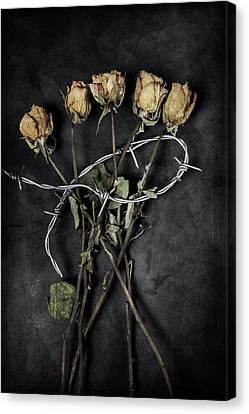 Pointy Canvas Print - Dead Roses by Joana Kruse