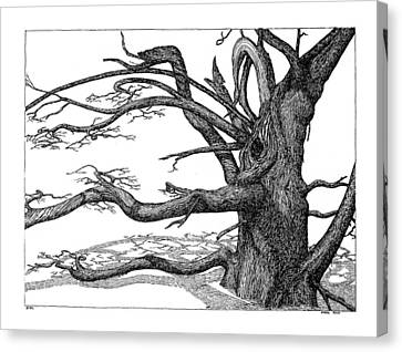 Canvas Print featuring the drawing Dead Tree by Daniel Reed