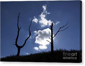 Dead Tree In Backlighting Canvas Print