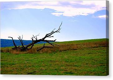 Canvas Print featuring the photograph Dead Tree by Mary Beth Landis