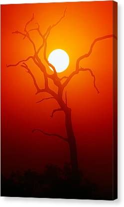 Dead Tree Silhouette And Glowing Sun Canvas Print by Johan Swanepoel