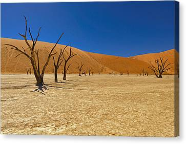 Dead Trees In Naukluft Park Namib Desert Canvas Print by Paul W Sharpe Aka Wizard of Wonders