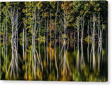 Canvas Print featuring the photograph Deadwood by Mihai Andritoiu