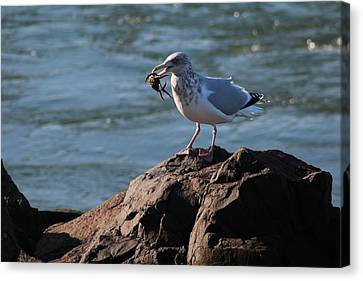 Death By Seagull Canvas Print