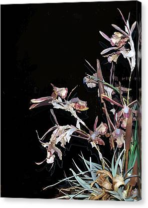 Death Of An Orchid  Canvas Print