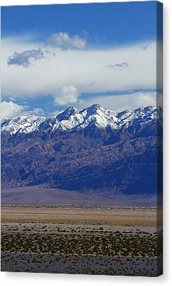 Grapevines Canvas Print - Death Valley Near Stovepipe Wells by David Wall