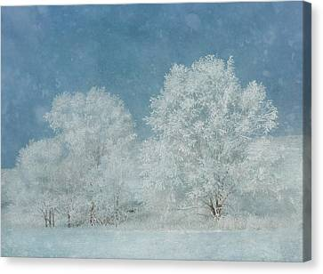 December Frost Canvas Print