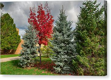 Deciduous And Evergreens Canvas Print by John M Bailey