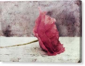 Decor Poppy Horizontal Canvas Print by Priska Wettstein