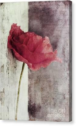 Decor Poppy Canvas Print by Priska Wettstein