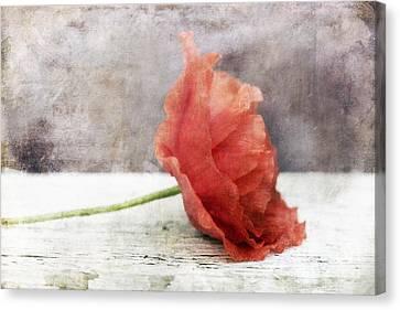 Decor Poppy Red Canvas Print by Priska Wettstein