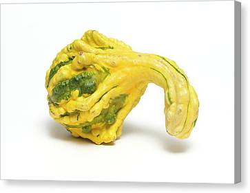 Gnarly Canvas Print - Decorative Gourd by Kaj R. Svensson