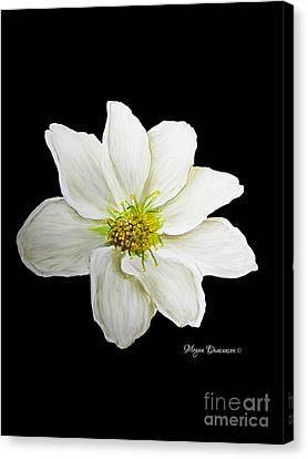 Decorative White Floral Flower Art Original Chic Painting Madart Studios Canvas Print by Megan Duncanson