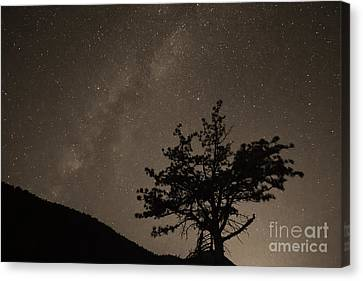 Deep Deep Deep Into The Night  Canvas Print by James BO  Insogna