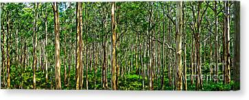 Deep Forest Canvas Print by Az Jackson