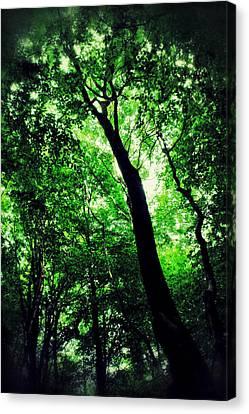 Deep Forest Canvas Print by Ian Hufton