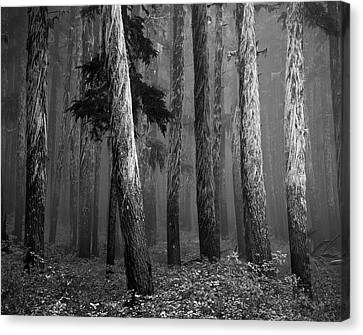Deep Forest Canvas Print by Leland D Howard